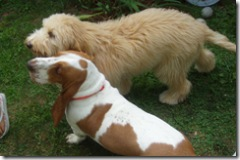 Daisy and Dudley-4